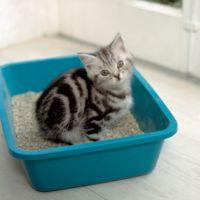Macska wc