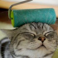 Macskaszőr eltávolítás