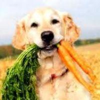 Vitaminok, Immunerősítés