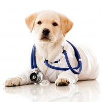 Kutya egészségügy