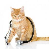 Macska egészségügy