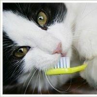 Száj- és fogápolás