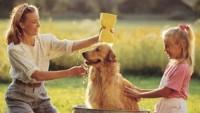 Kutya higiénia,...