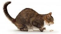 A macskahányás kezelése