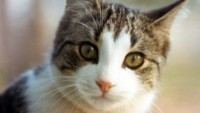 A macskasérülések otthoni ellátása