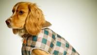 Kutyaruha: hóbort vagy hasznos felszerelés?