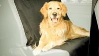 Kutya a kocsiban - hogyan szállítsuk?