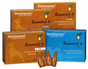 Dermoscent Essential 6 kutyáknak állatgyógyszertár
