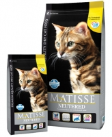 MATISSE NEUTERED CAT