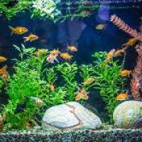 Akvárium tartozék